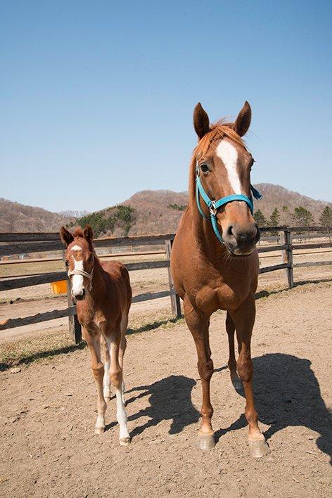 川崎900mレコードホルダーのユーリカと当歳牝馬。 父親ダンカークだそうです。 ちゃんと、お母さんやってました~
