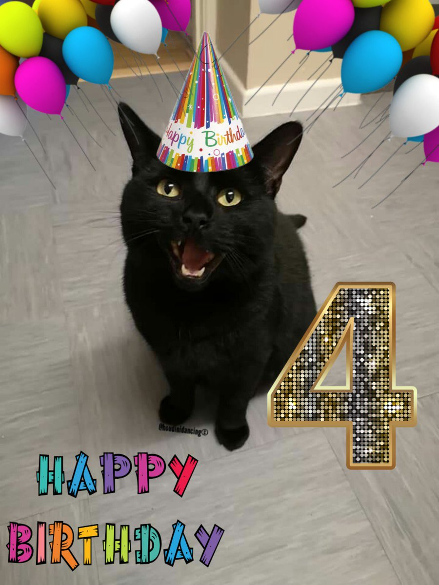 In 4 today!! Mum said I&#39;m getting a chicken cake with a candle but after she gets back from work    #houdini #HoudiniDancing #cat #cats #catlovers #love #black #blackcat #blackcats #blackcatsrule #animal #Ambassacats #AdoptDontShop #catsoftwitter #Twitter #catlife #dance<br>http://pic.twitter.com/FEPzSAFoHq