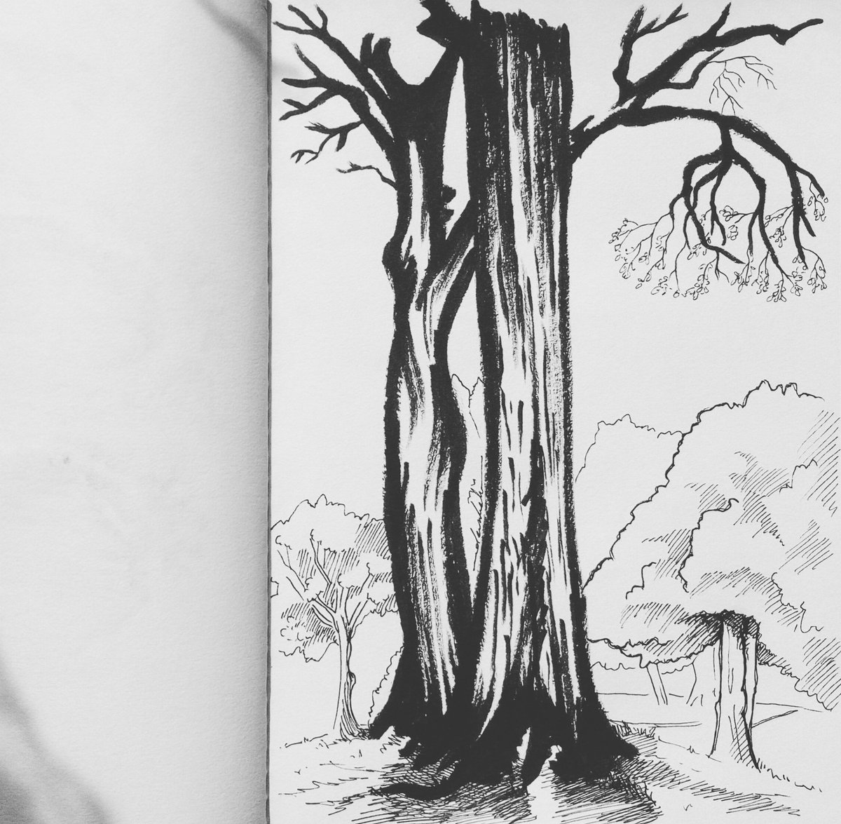 Trees 🌳 #dailyart #dailyillustration #trees #park #drawinthepark #comicbookproject #nature https://t.co/4A6sK0fuqB