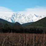 Image for the Tweet beginning: Santa Rita harvest reveals yields