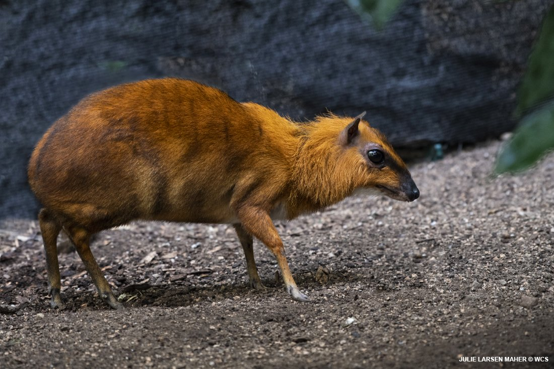 Bronx Zoo On Twitter Pop Quiz What Animal Is This Here S A Hint
