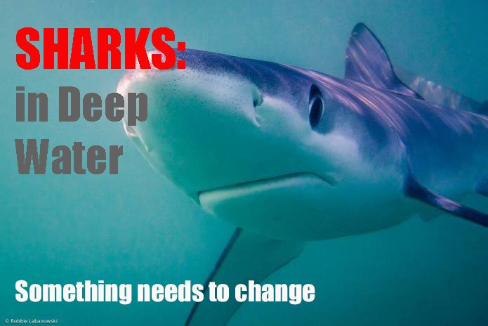 Every day more than 250,000 sharks are killed . We&#39;re eating more shark than ever before and contributing to a silent , underwater extinction . Please support the making of this film by Matt Brierley . Thank you . Please RT  https://www. indiegogo.com/projects/shark s-in-deep-water-a-film-to-change-things#/ &nbsp; … <br>http://pic.twitter.com/I6uuxbT2nL