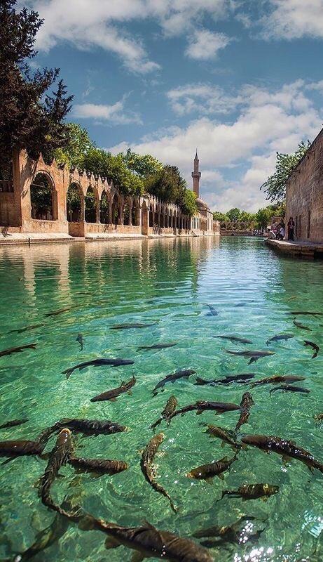 Balıklı Göl, Şanlıurfa