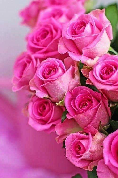 Открытки с днем рождения с розами елене, одноклассниках