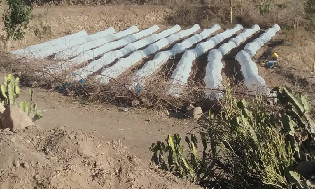 The second season, farmer(Ali Saeed Aldhubhani),decide to continue growing crops, and using agricultural techniques; this ensure the sustainability, and adoption of agricultural techniques in #ERG2 #Taiz. <br>http://pic.twitter.com/lD8OXLUu4V