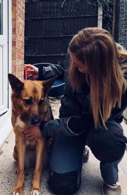#URGENT #FOSTER for collie x GSD 8yo pet and child free, pls message for details, can't stress how urgent this is. Can be transported anywhere <br>http://pic.twitter.com/8AqbXivUx5
