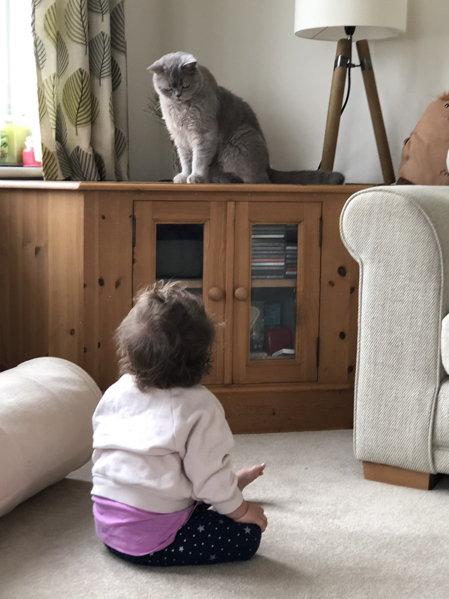 Putting the annoying Small Human in her place earlier today... you may look up to me from afar and enjoy my awesomeness from the floor... also, I can groom my tail without your help thank you very much  #TuesdayTruths #CatLife #ToddlerLife<br>http://pic.twitter.com/MG4sDx64A9