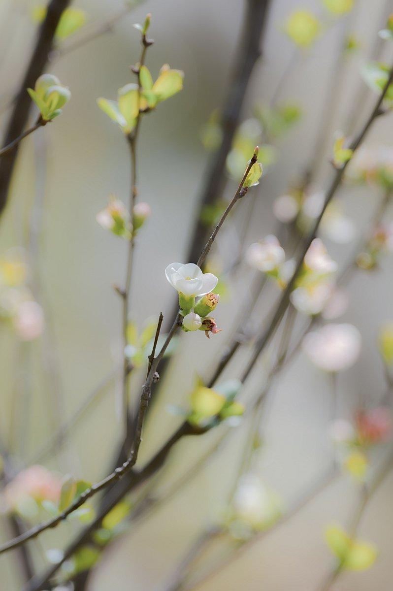 RT @pkpk_photo: ※タテ  #お花ですネン #寫眞倶楽部 #Pentax https://t.co/ogZAuSJv90