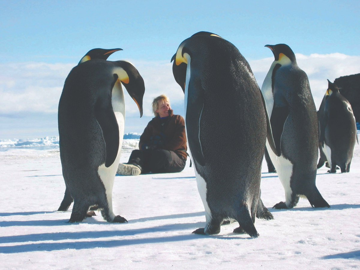 To celebrate #WorldPenguinDay, hear the incredible story of our Chancellor Dame Jane Francis, who spent much of her career conducting pioneering research across the Arctic and Antarctic 🐧