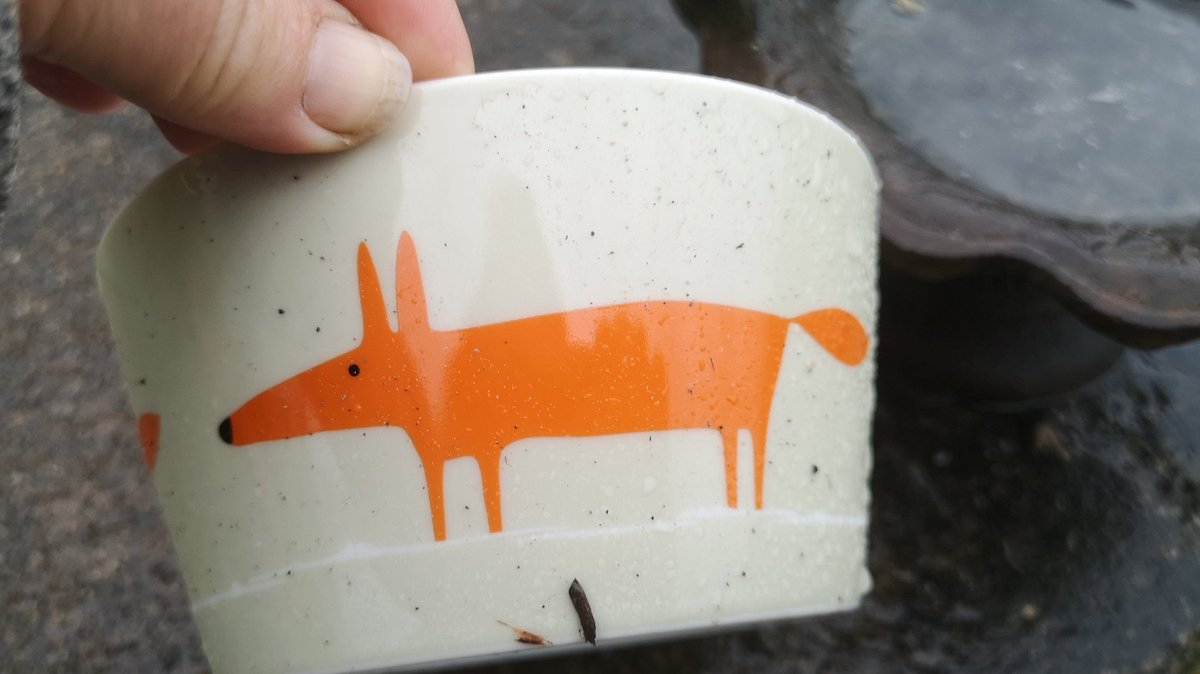 Good morning! Since Skittles is now a regular visitor, and when s/he visits with Foxy there is no extra bowl, we got this cute #fox bowl &#39;for&#39;  Skittles. Of course, that created plenty of interest last night! Video to follow  <br>http://pic.twitter.com/RFU2KvFd8t