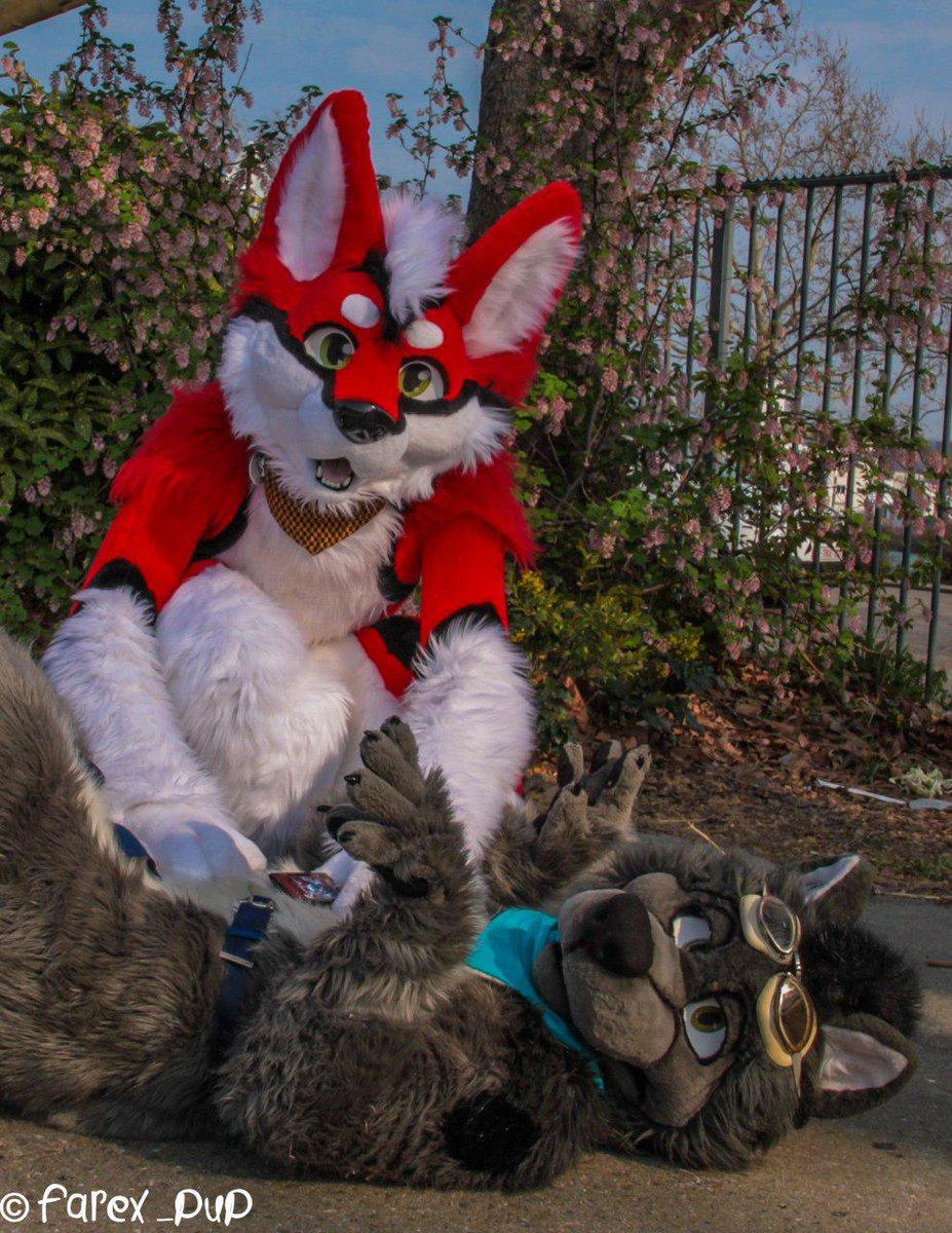 I love belly rubs &lt;3 (with @DvonTheHusky ) #Furrypride #Furry #fursuiting #fursuiting #cutefursuit   Photo taken by @Farex_Pup<br>http://pic.twitter.com/gNWOBRI3jB