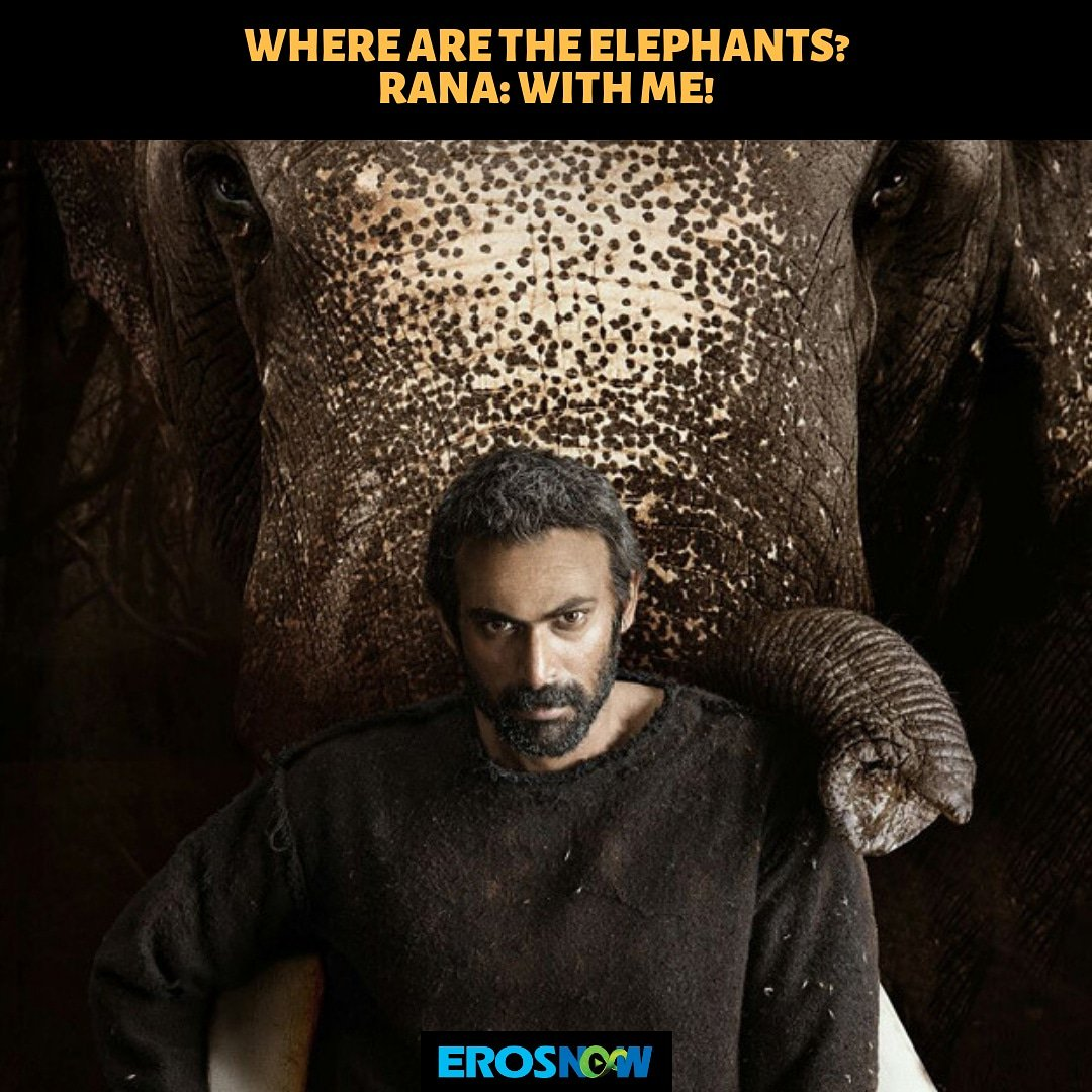 Hey Queen, if you need them, youll have to get in touch with @RanaDaggubati! 😉 Stay tuned for our upcoming film #haathimeresaathi, coming soon! 🐘 #ErosNow #ranadaggubati @RidhimaLulla #bollywoodfilm #BollywoodActor #GOT8