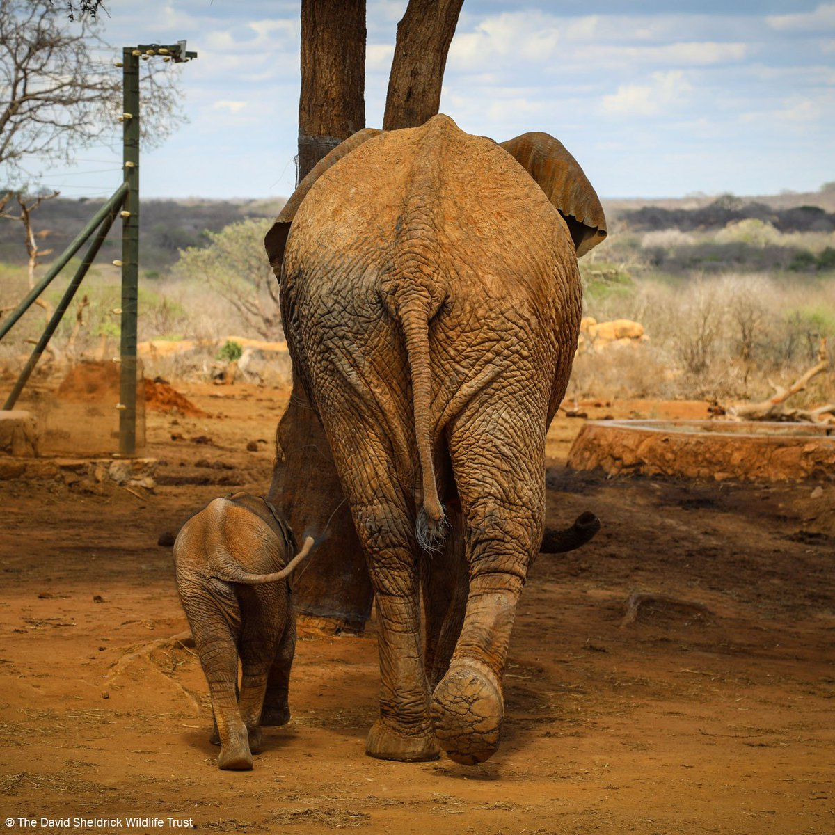 Every day we celebrate our wonderful planet  and the creatures that call it home, like little Nusu and his mum Nasalot. Now has never been a more critical time for wildlife, as our own species drives others towards extinction. Help us reverse this:  http://www. sheldrickwildlifetrust.org  &nbsp;  <br>http://pic.twitter.com/ota9leKwxL
