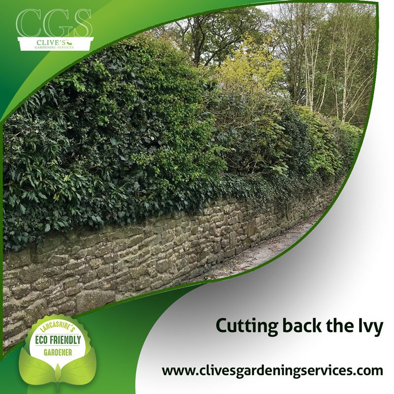 CGS Clives Gardening Services's photo on Clive