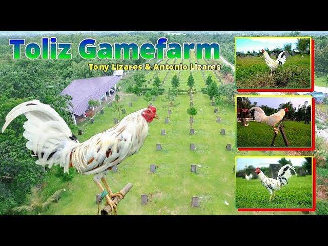 Wakela gamefarm