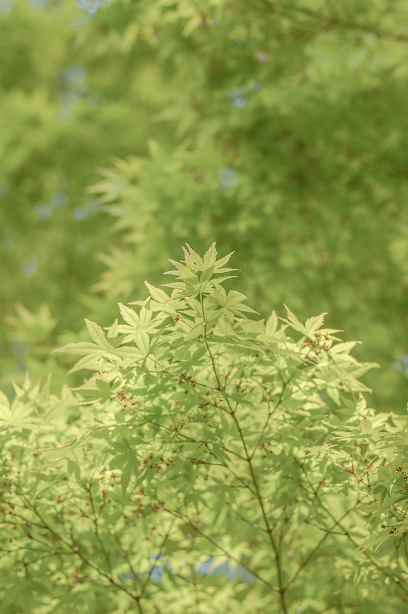 RT @pkpk_photo: 新緑、、 三種盛りでゴザイマス。。。。  ※タテヨコタテ  #寫眞倶楽部 #Pentax https://t.co/OGofF7AEbg