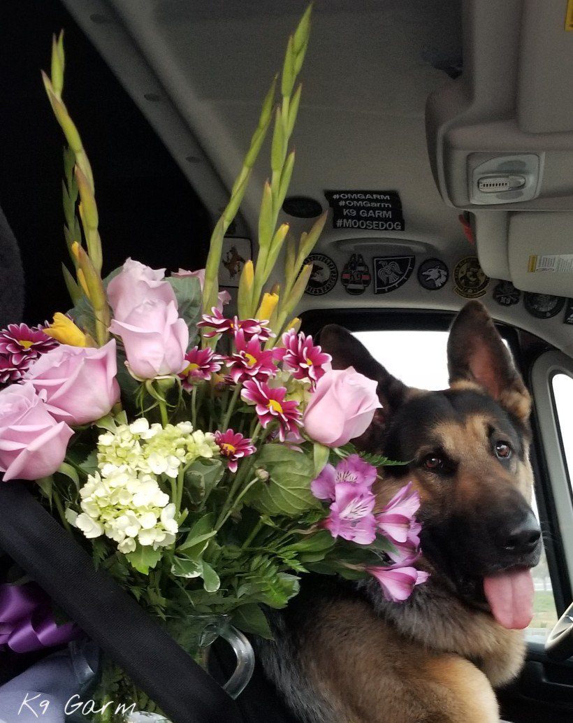 Happy #AdminProfessionalsDay ! #moosedog bought flowers to thank ours for all that she does for both myself and the teams each and every day, the sometimes underappreciated, unsung hero of the operation! <br>http://pic.twitter.com/7z3bE2RGhG