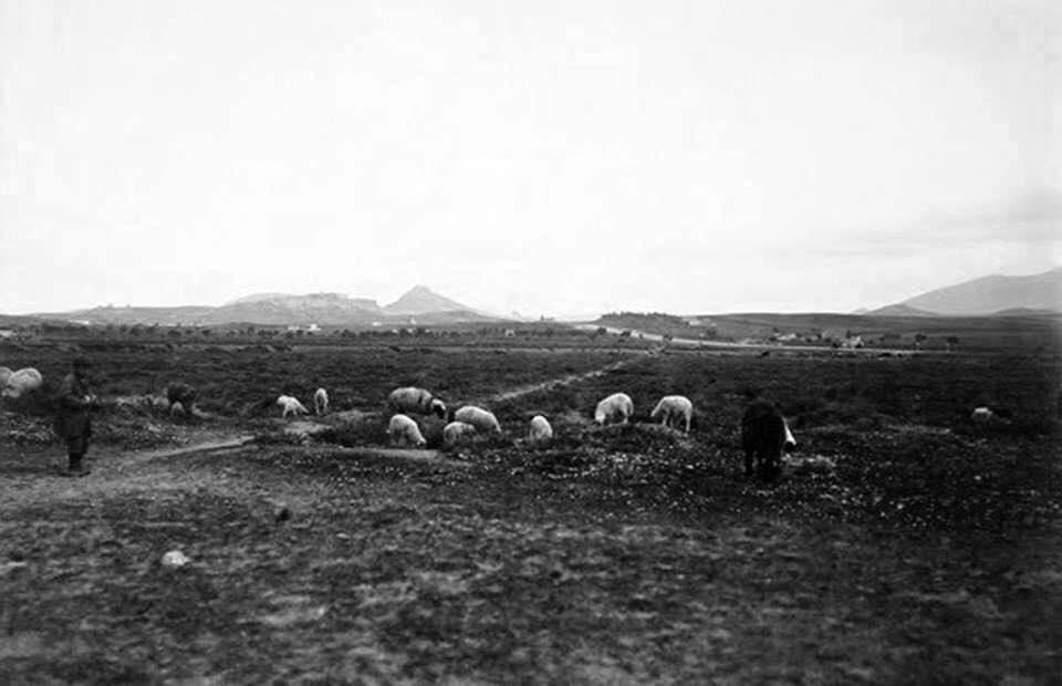 Η περιοχή της Καλλιθέας, το 1905, με βοσκούς και πρόβατα.