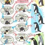 ペンギンの種類の見分け方知っていますか?これを見れば分かります!