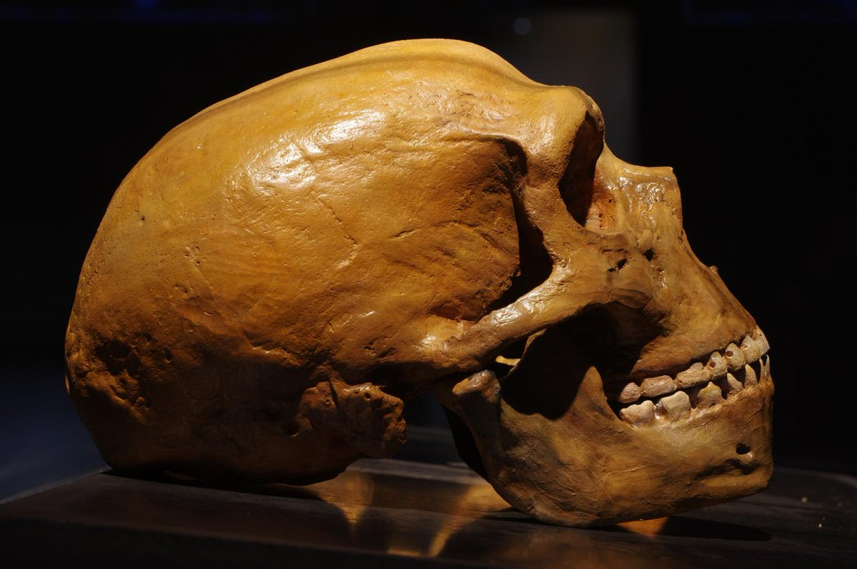 Neanderthal remains discovered in Serbia for the first time trib.al/FB2pTxx