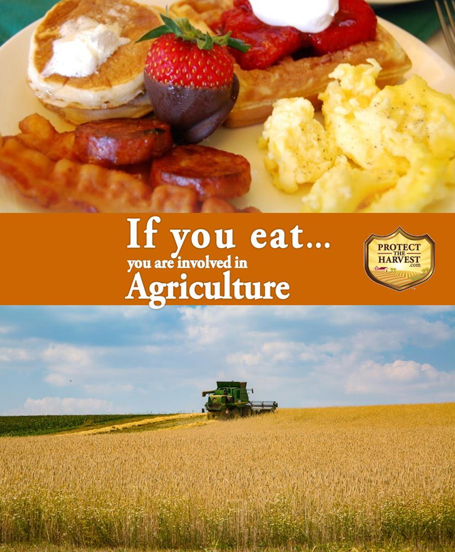 If you #eat, you are involved in #Agriculture & it is under attack by special interest groups. We need to protect our nation's ability to produce #food. Learn more about feeding the world: https://t.co/tPBeuul8oX #foodie #eating #feedtheworld #producefood #livestock #farming https://t.co/ZJIF1IZe8d