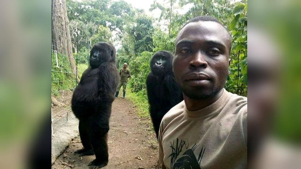DRC Congo park rangers selfie with gorillas goes viral f24.my/4p78.t