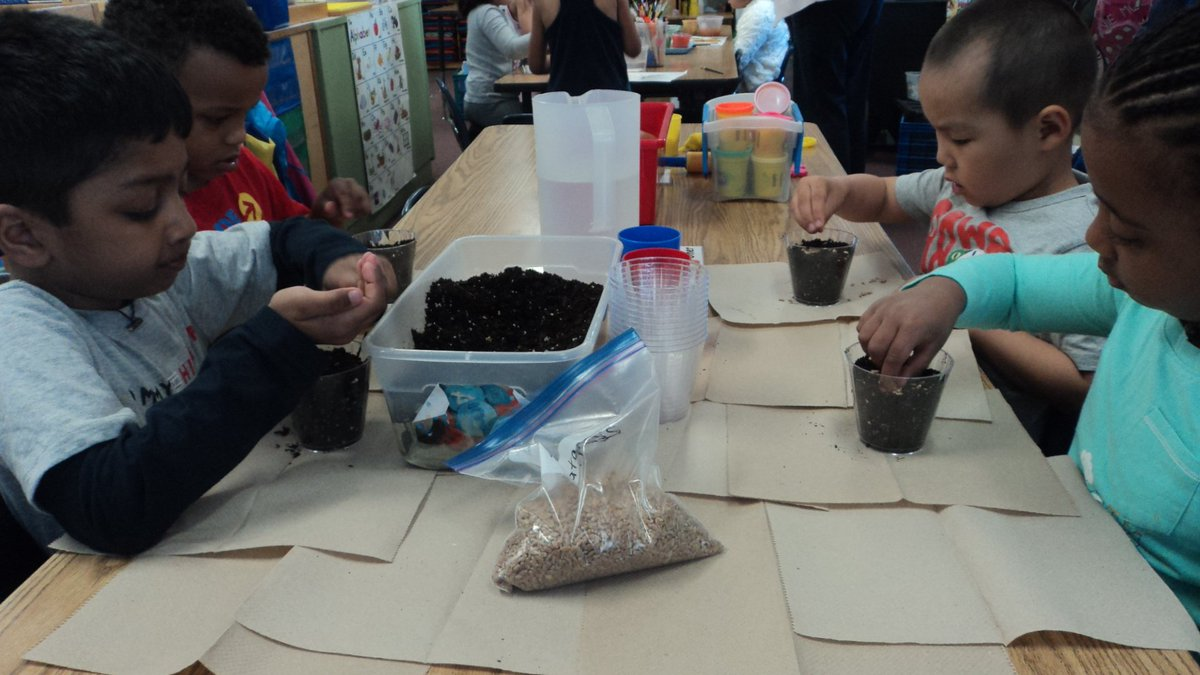 Preks planted wheat grass seeds in pots today and will closely observe the plant growing process. <a target='_blank' href='http://twitter.com/CampbellAPS'>@CampbellAPS</a> <a target='_blank' href='http://twitter.com/APS_EarlyChild'>@APS_EarlyChild</a> <a target='_blank' href='http://twitter.com/AFACfeeds'>@AFACfeeds</a> <a target='_blank' href='https://t.co/05KUUJvhHx'>https://t.co/05KUUJvhHx</a>