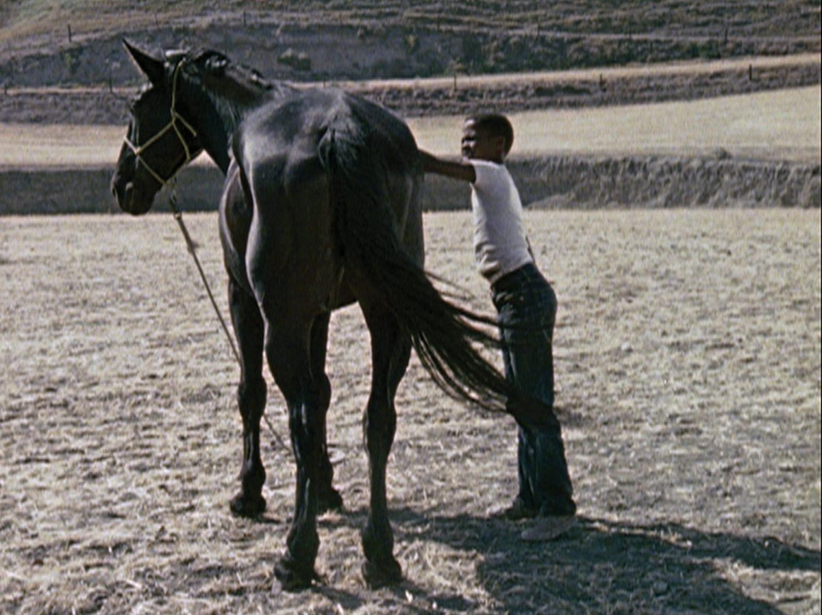 On THE HORSE: Quietly poetic & deliberately enigmatic, it derives from a short story Burnett had written in homage to William Faulkner...It gives us clear evidence of his sensitivity to design, mastery of decoupage, & ability to develop dramatic tension. criterionchannel.com/charles-burnet…