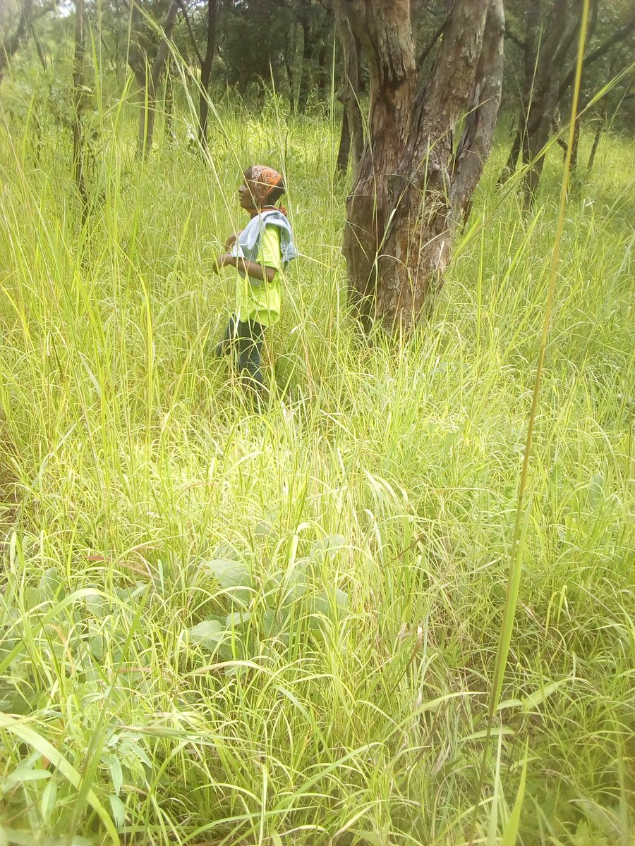 In five years' time, I see myself owning a large plot of land, about 500 acres, where I will expand my greenhouses and carry out intensive farming.#womeninagriculture#@EAYouthInAgric @FAO @AimKazika @rikolto @YPARDUganda