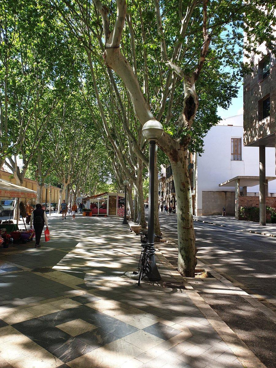 #WednesdayWisdom enjoyed a pleasant walk along a tree lined avenue. #mindfulness