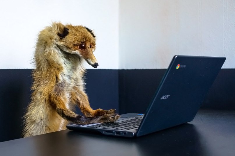 Картинка лисенок за компьютером