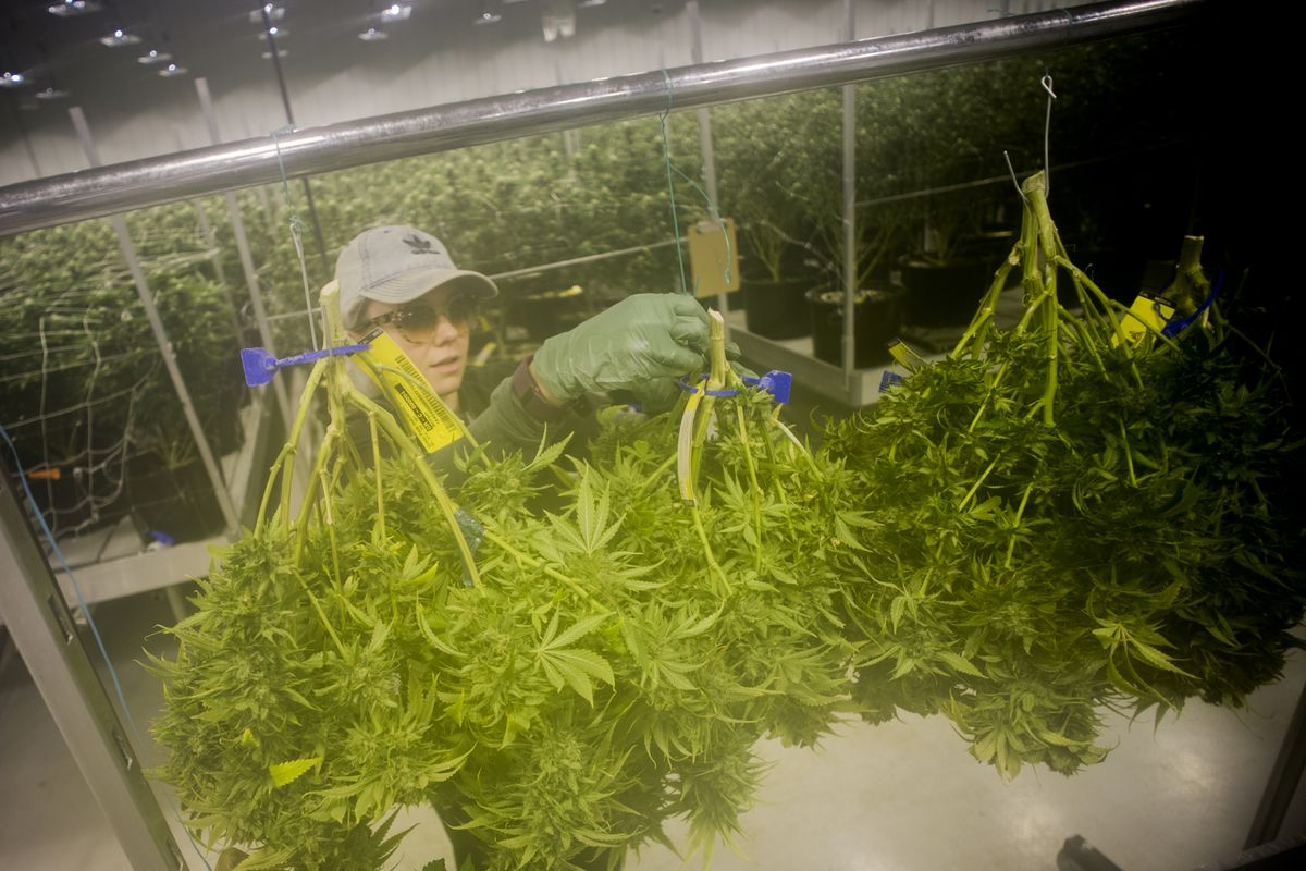 Michigan takes pulse of interest in recreational marijuana industry. #Cannabis #Michigan  https:// hubs.ly/H0hzmkf0  &nbsp;   by @amywrites_<br>http://pic.twitter.com/3quIIxzUBg