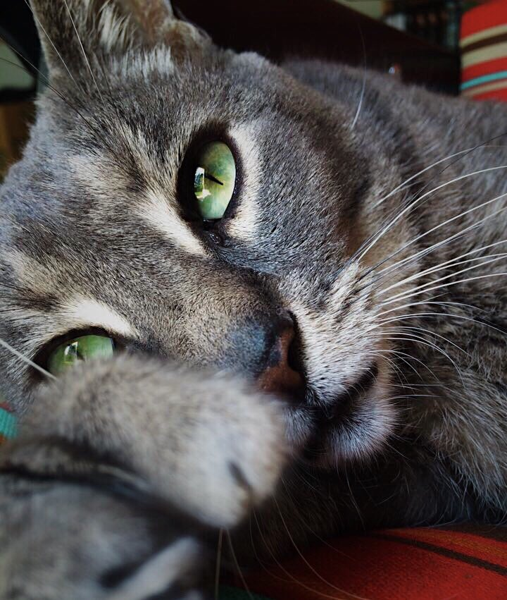 Do you like photos of cute cats? I took one of those. <br>http://pic.twitter.com/3dWs8m83Ht