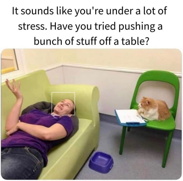 Cat therapy. <br>http://pic.twitter.com/qhTZaDkaN4