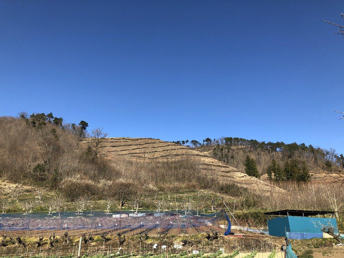 絵の具で塗ったみたいな青空! 木を伐採した場所には桜の木を植えるそうです。#空ネット #鹿頭山 #霊山町