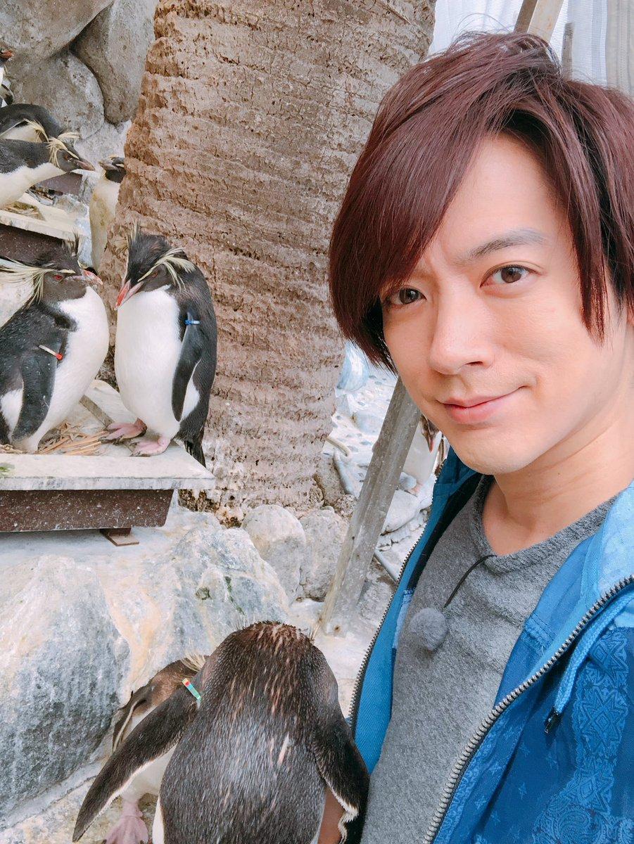 ツイッター 志村 動物園