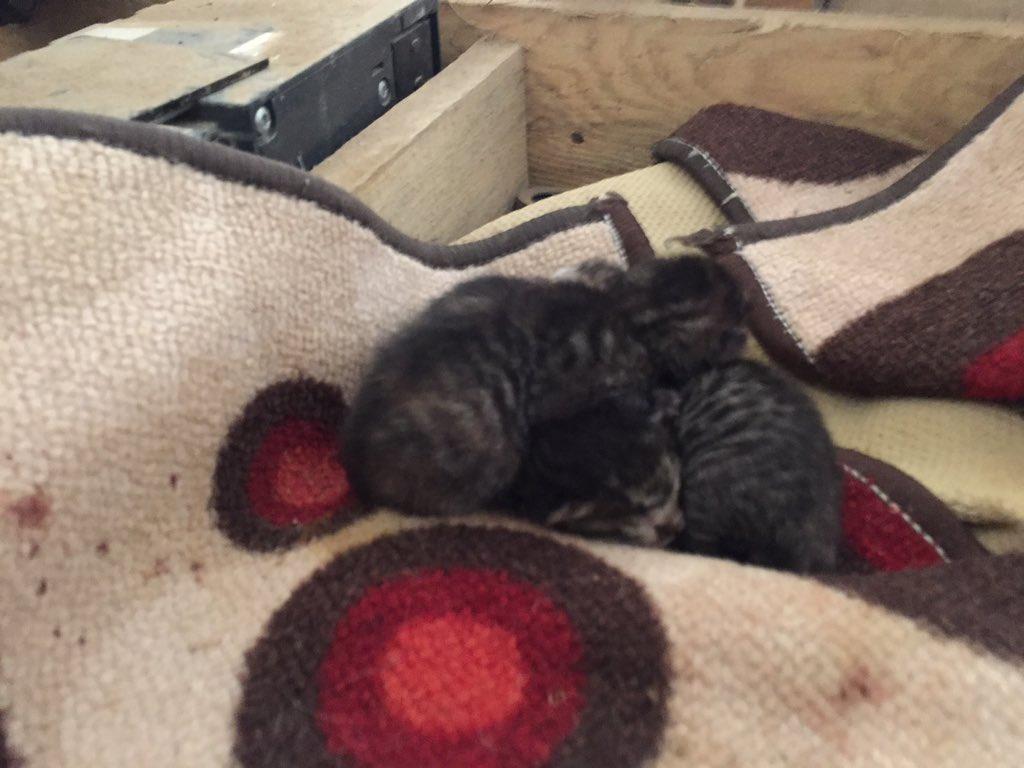 @haykurder Çalıştığım şirketin şantiye deposunda kedi yavrulamış 3 yavrusu var.. çok şükür vicdanımız bu yavruların yanında büyüteceğiz