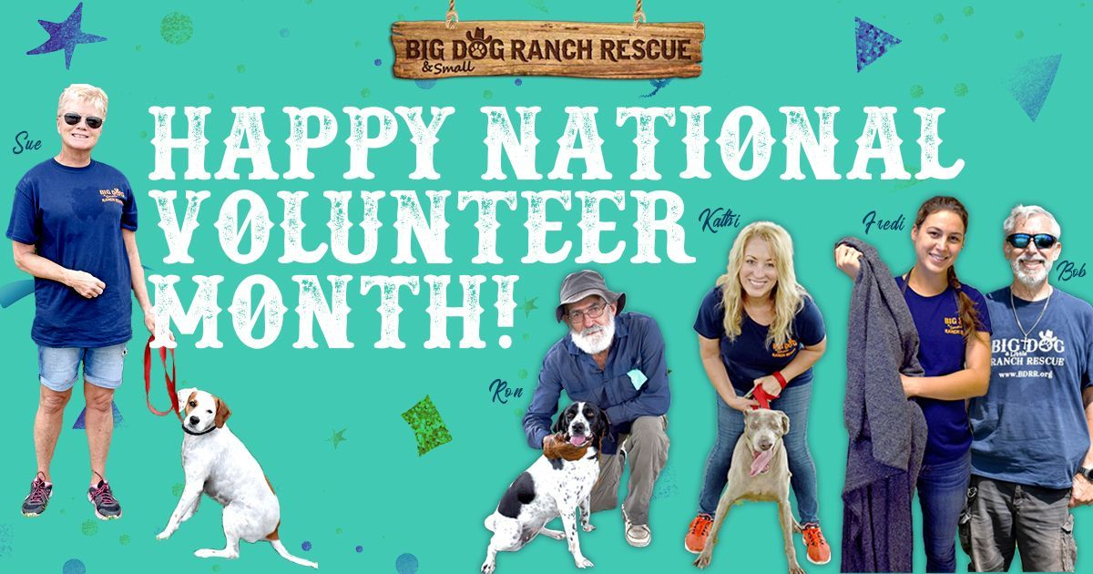 DYK: April is National Volunteer Month! 🐾💛💯  On behalf of all of our puppies and dogs, we'd like to recognize and #thank ALL of our #volunteers, who work tirelessly to help us save lives. We truly appreciate you!  #bigdogranchrescue #rescueismyfavoritebreed #adoptdontshop