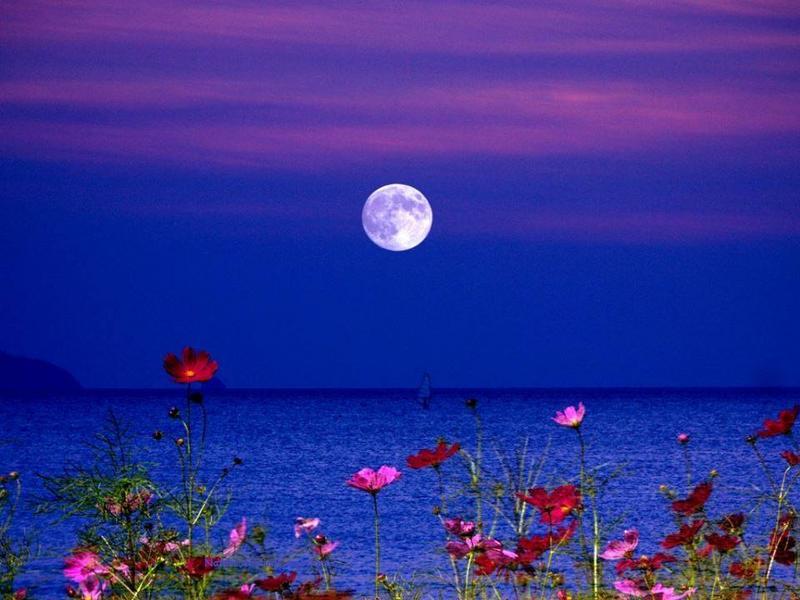 Ночь лето луна цветы красивые картинки