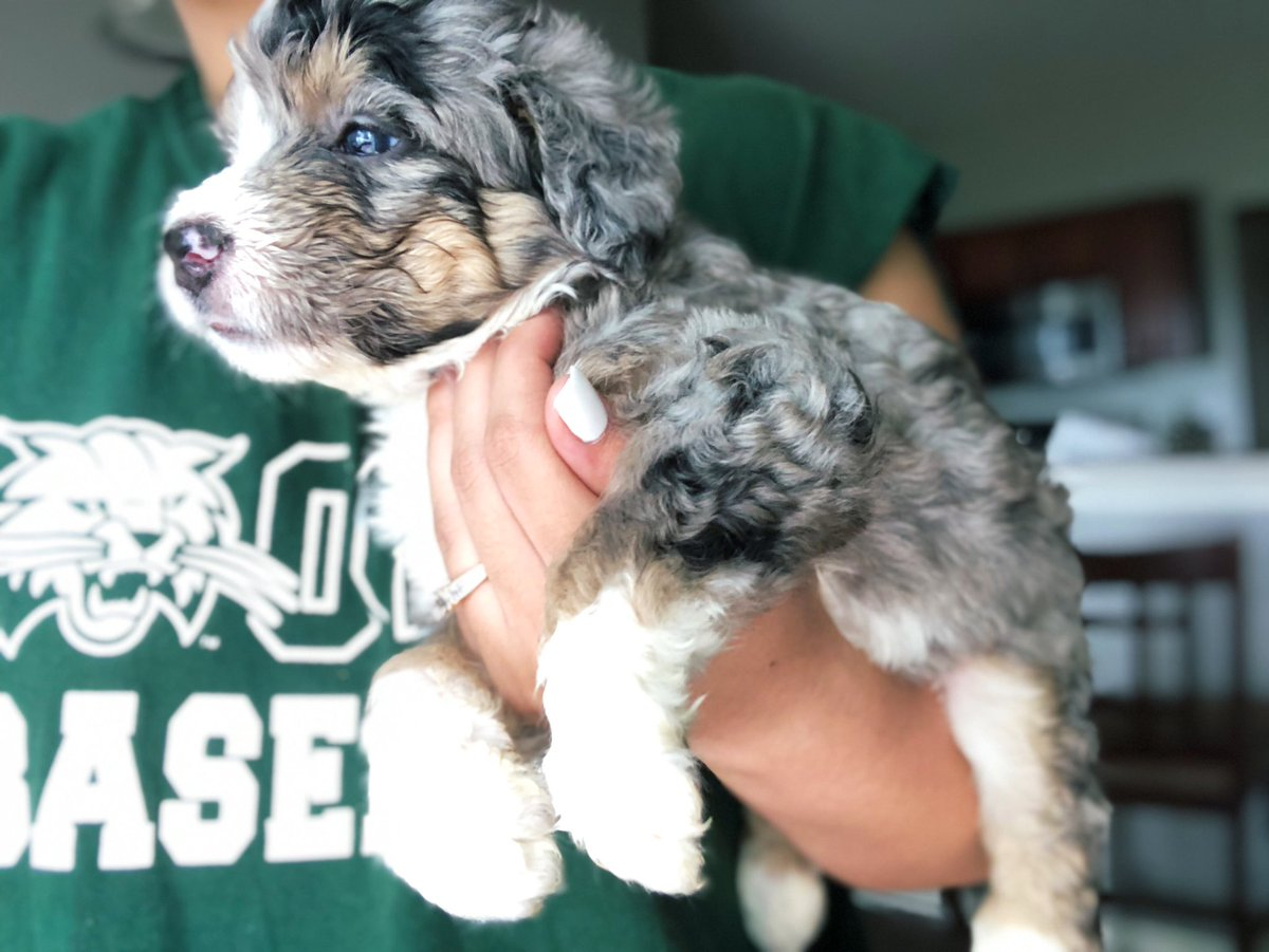 Txt : (740)297-9310 to reserve your pup today! Tweet added by