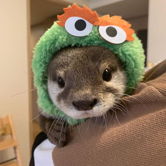 otters wearing hats: something I didn't know existed but now know I needed