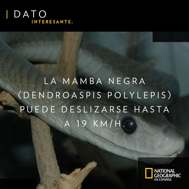 National Geographic's photo on #FelizDomingo