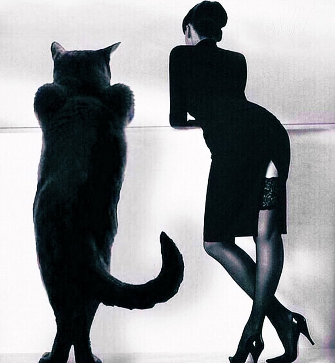 Картинка маргарита и кот бегемот спиной