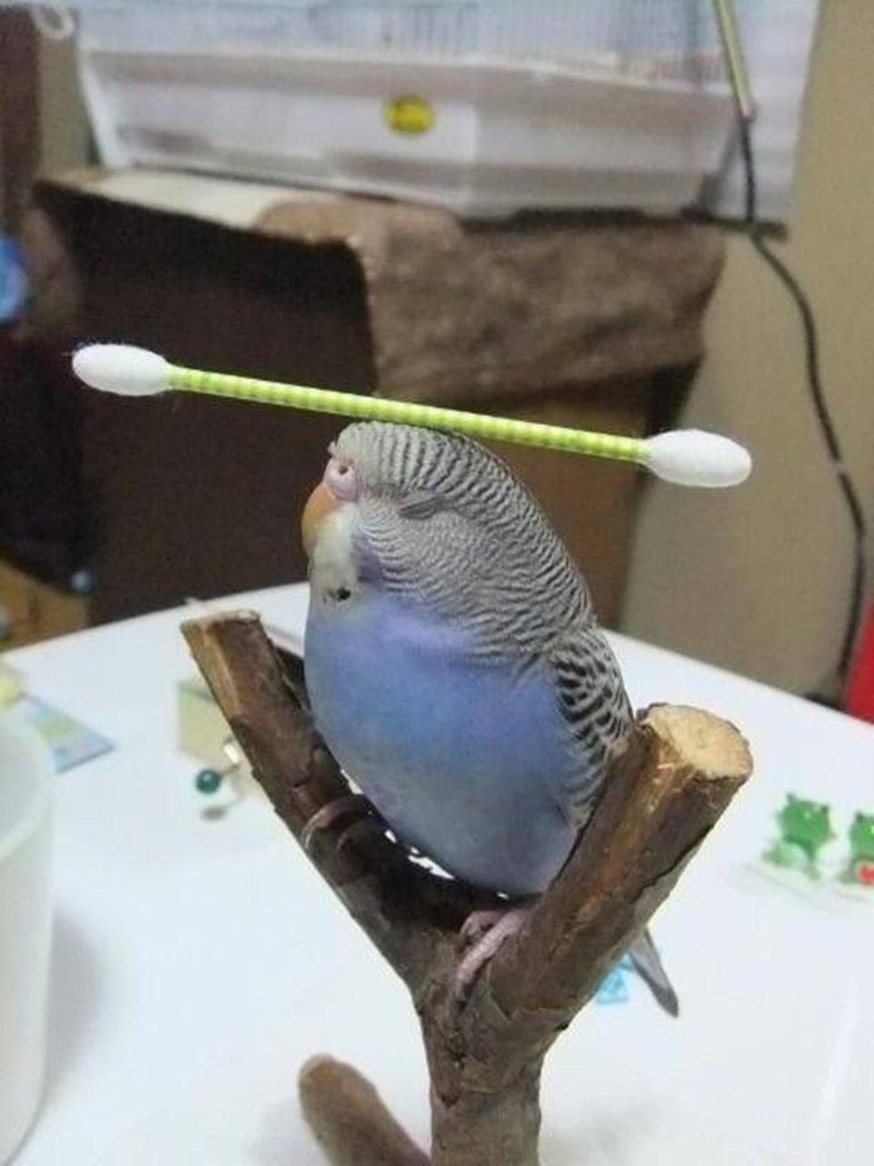 Интернете картинки, картинки про попугаев смешные с надписями