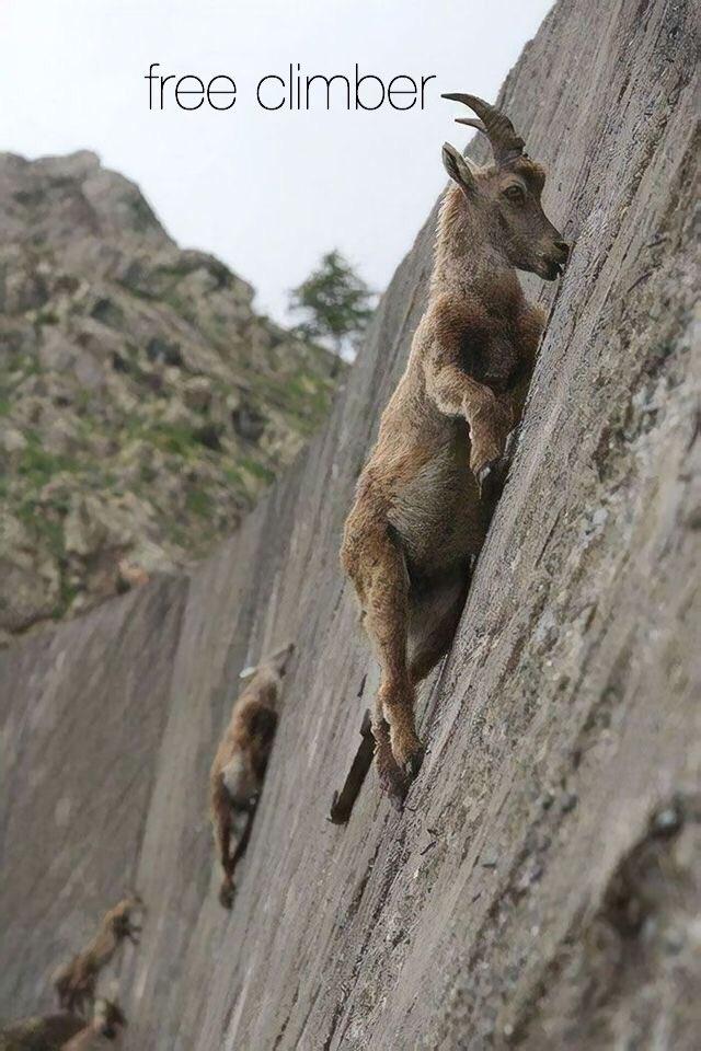 Иван alias #Johnny on Twitter: #ConUnaFoto free climber.…