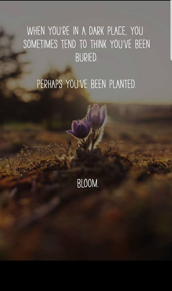#ColorMeGrateful  This quote's been tugging at my heart all day.  The person who shared it is homeless due to health issues, but they have never stopped her from believing she was planted in her dark place for a reason. Bloom! @Raffi_RC @YoYo_Ma @mandyharvey