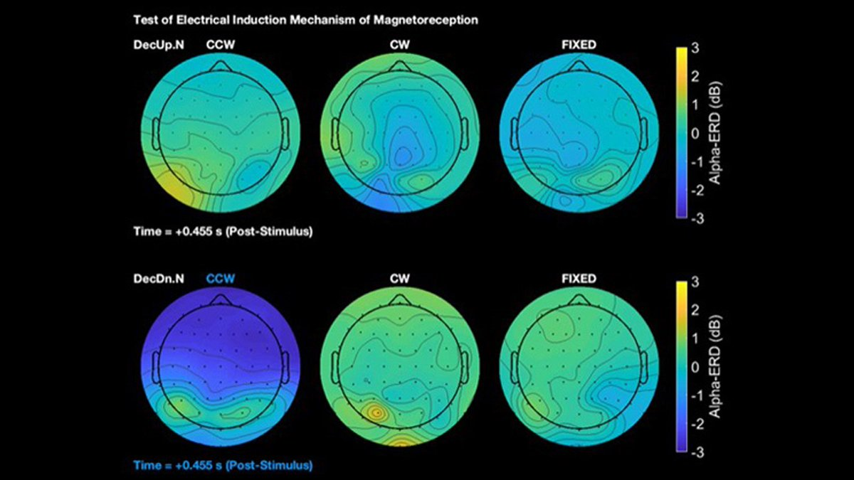 The human #brain can unconsciously respond to changes in Earth's magnetic fields, according to a team of geoscientists and neurobiologists. Read about this #eNeuro study here: http://bit.ly/2D5pneh