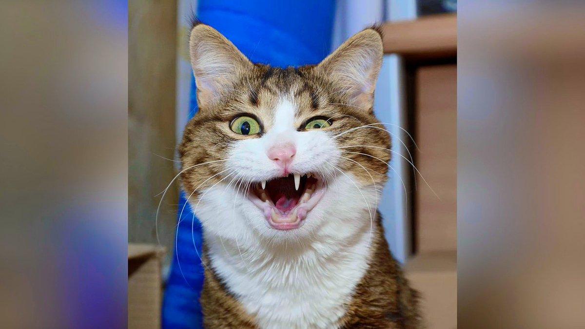 Смешные картинки про кошек до слез новые, бумаги шаблоны