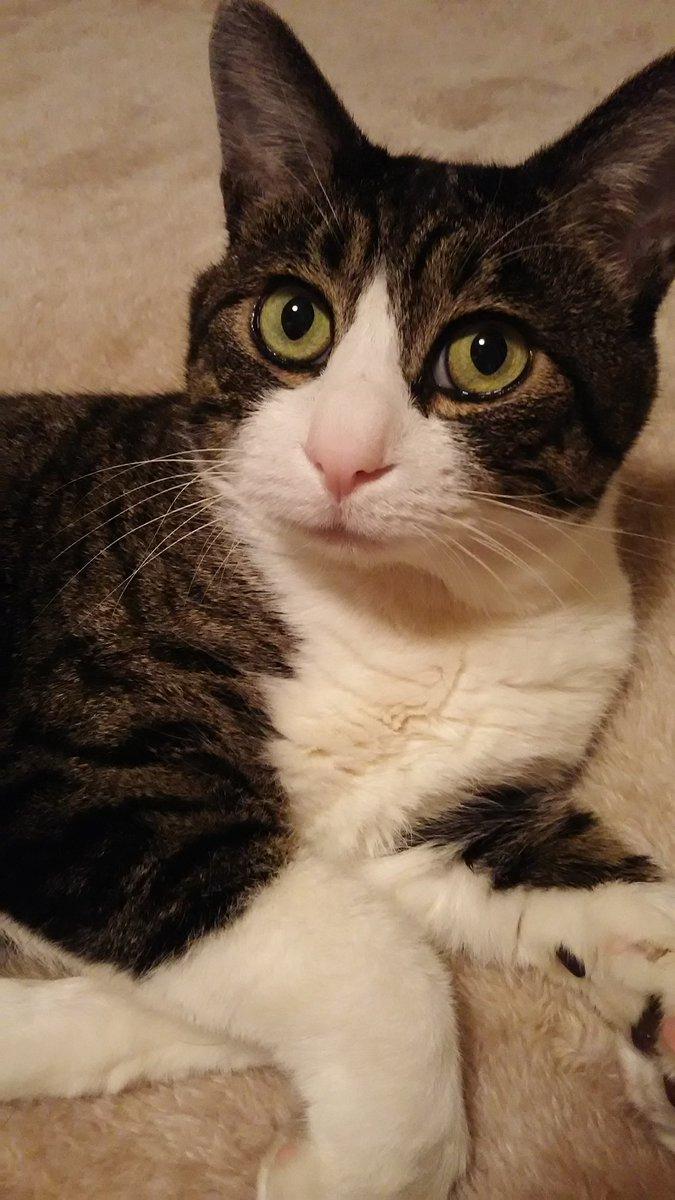ママの会社って、猫ちゃんを家族にしている人が多いんだって。しかもみんな保護猫だっていうから素晴らしいよね。ボクの仲間がしあわせに暮らしている話を、ママが嬉しそうにボクに話してくれるんだよ。いい会社に転職できてよかったね、ママ。