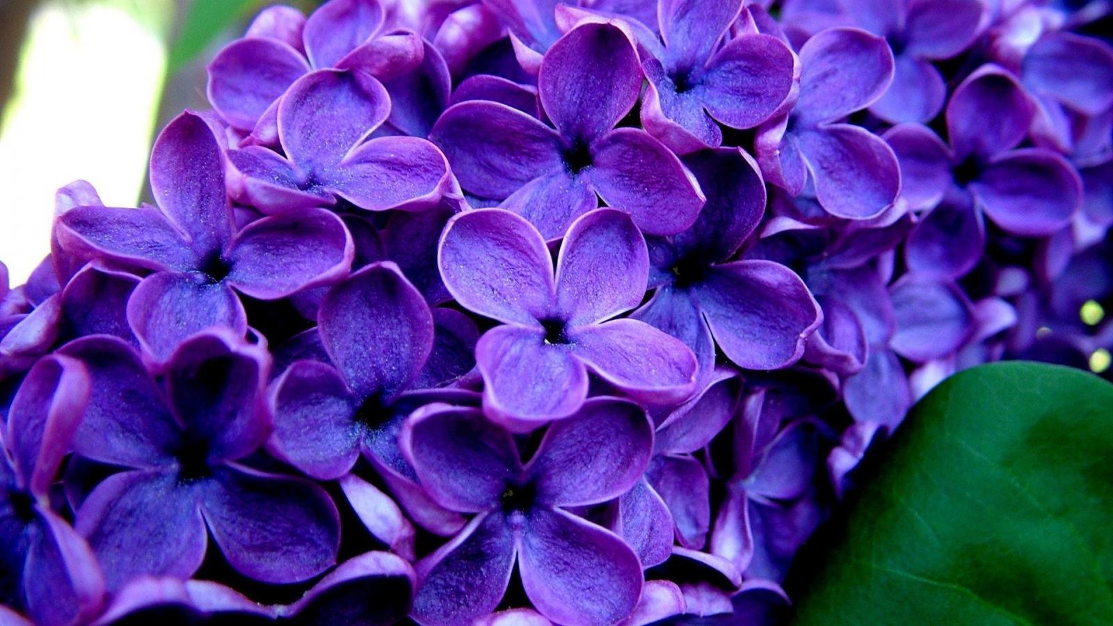 Картинки цветы в хорошем, рождения винни-пуха